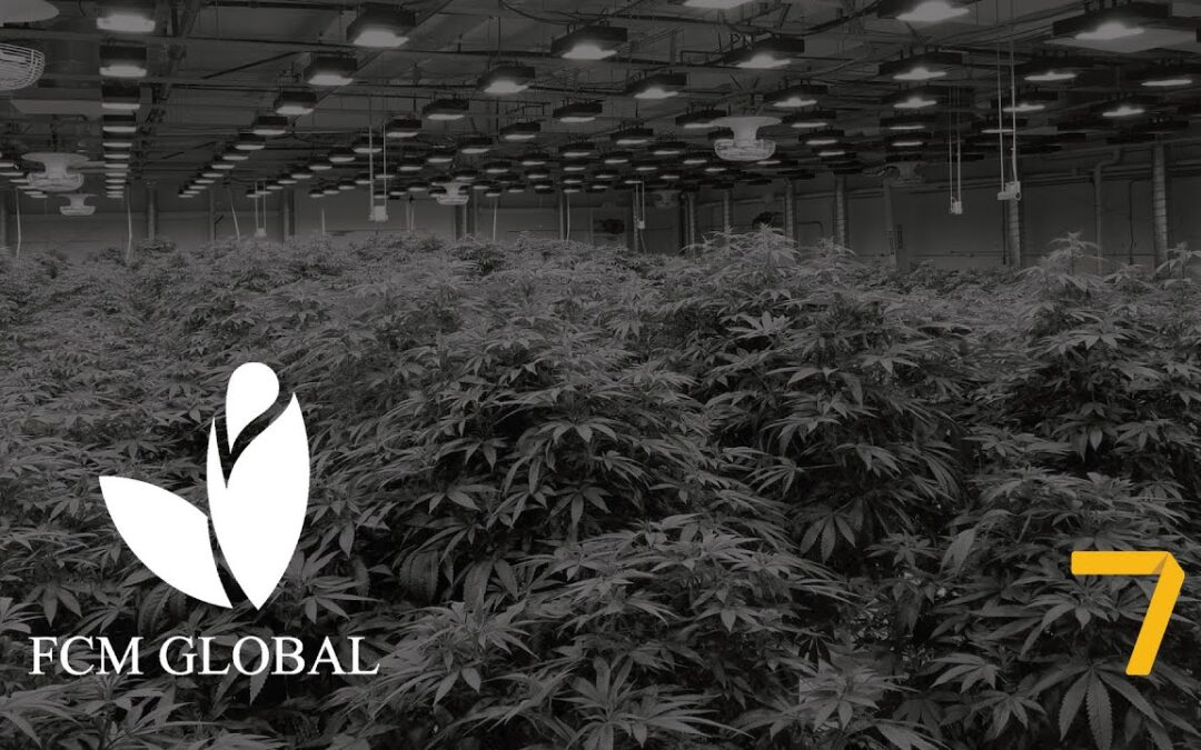 FCM Global, una colombiana disruptiva para el mercado de cannabis medicinal en el mundo
